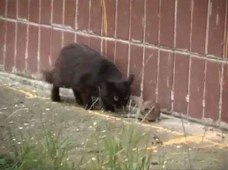 1 fare 5 kedinin hakkından geldi işte görüntü